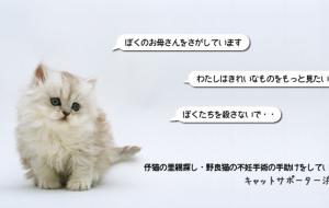 市民活動団体 キャットサポーター浜松