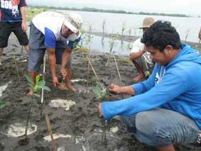 マングローブを植林する現地住民(インドネシア・ジャワ島)_2