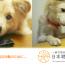 一般社団法人 日本聴導犬推進協会