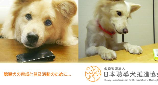 公益社団法人 日本聴導犬推進協会