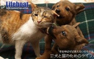 NPO法人犬と猫のためのライフボート